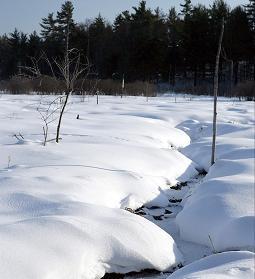 Splendoare de iarna – workshop de fotografie